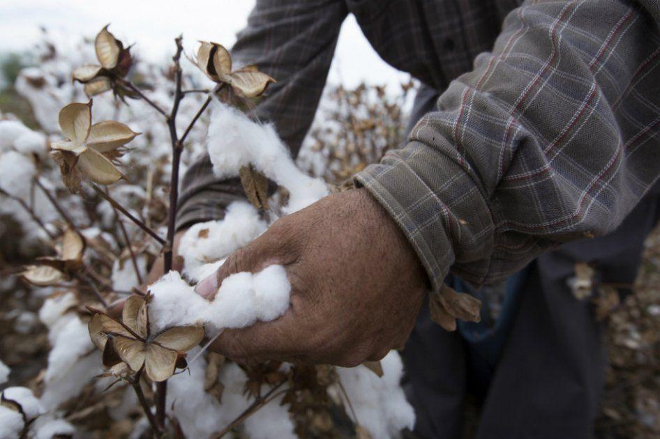Algodón Industria Textil